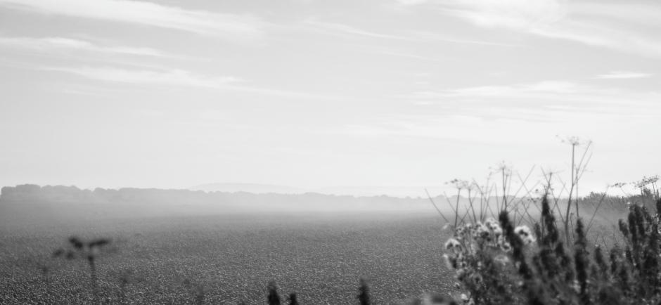 Mist on Salisbury Plain